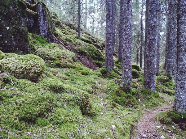 Excursió per Østmarka / Hiking in Oslo / På tur i Oslo Skogen