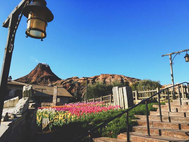 Disney Tokyo Disney Sea DisneySea Theme Park Vscocam Tulips