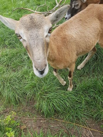 Animal Themes Grass Domestic Animals High Angle View Mammal One Animal Green Color No People Nature Day Outdoors