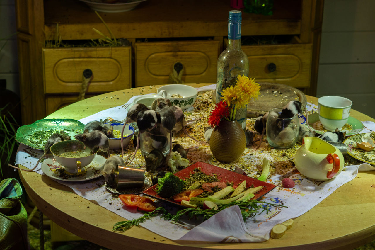 food and drink, plate, food, table, animal, indoors, healthy eating, freshness, no people, animal themes, ready-to-eat, vegetable, wellbeing, drink, mammal, domestic, refreshment, pets, vertebrate, domestic animals, meal, glass