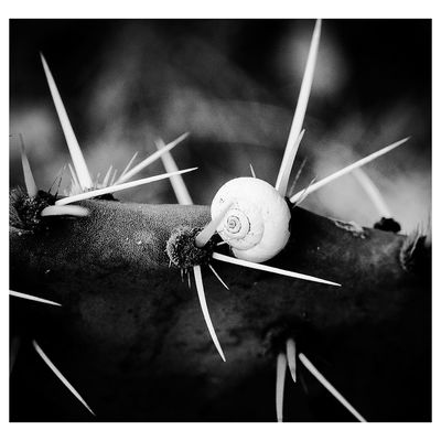 No People Close-up Fujifeed Nature Naturephotography Macro Photography Macronature Fujifilm_xseries Fujinon 60mm Indoors  Space Golf Club Galaxy Day Astronomy