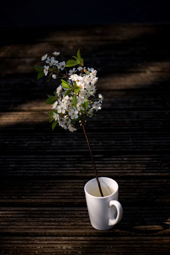 Image Bouquet Coffee Cup Colorful Cup Flower Flowering Branches Flowering Plant Freshness Minimal Nature Plant Sherry Blossoms Sherryblossom Spring Still Life Summer Table Vertical White Color White Flowers Wood - Material