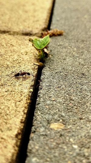 PhonePhotography Earth Nature Like Human Grasshopper Insect Sunlight Close-up Green Color Ant Colony