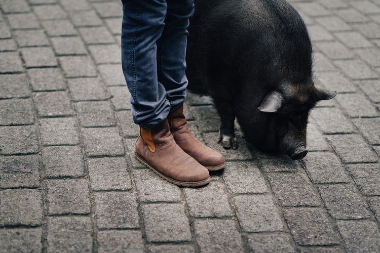 Low section of woman with pig on street