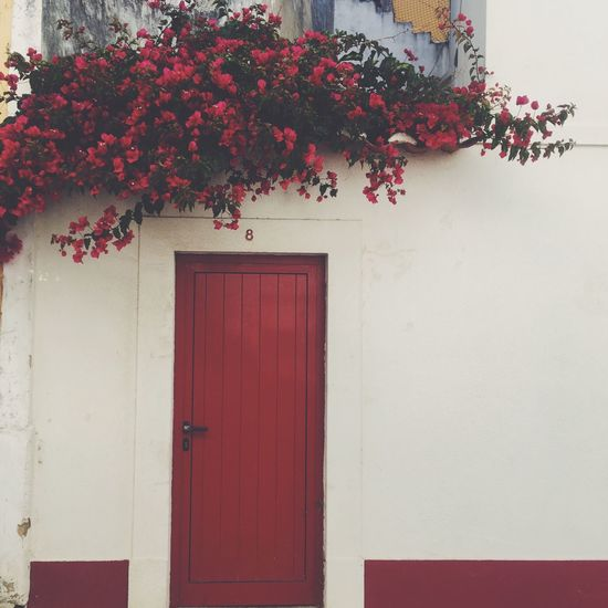 It's all about red. Flowers Reddetails Saomartinhodoporto