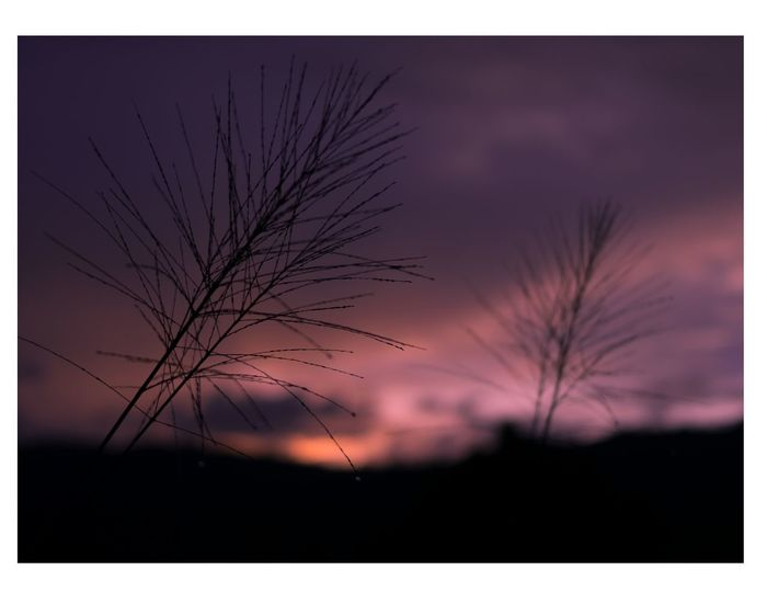 Bare Tree Silhouette Scenics Tree Sunset Landscape Nature Beauty In Nature Branch Outdoors Tranquil Scene Rural Scene Sky Tree Trunk No People Agriculture Backgrounds Beauty Multi Colored Night