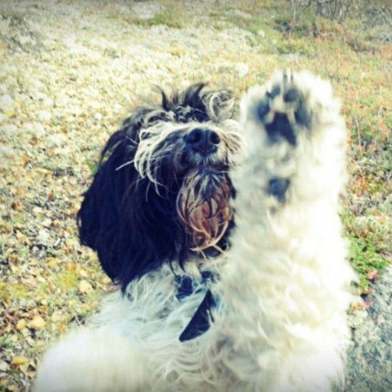 Dog Nice Beautiful Eyeemphotography EyeEm Gallery Photo Love ♥ Eyeem Animal Like Interesting