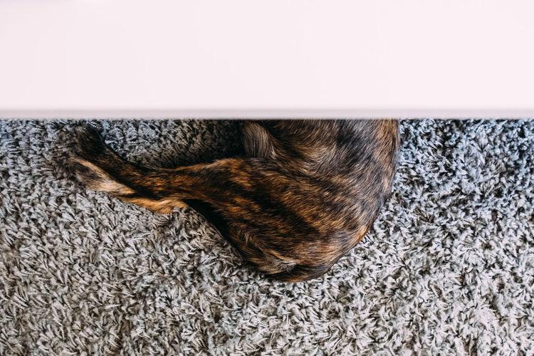 Close-up of lizard sleeping on rug