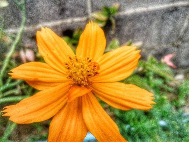 Flower Petal Fragility Flower Head Freshness Nature Growth