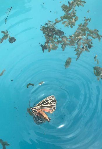 Water Animal Animal Themes Animal Wildlife Animals In The Wild Swimming Vertebrate Outdoors High Angle View Reflection Beauty In Nature Nature Day Floating On Water