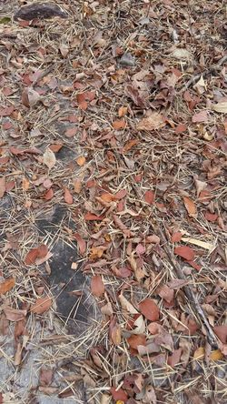 Abundance No People Nature Close-up Textured  Outdoors Vientiane, Laos Lifeasiseeit Johnnelson Life As I See It John Nelson Nature Leaves Fallen Leaves...