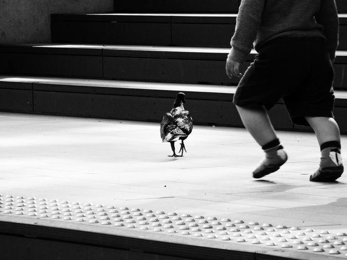 Animal Photography Annoying Annoying Kids Bird Black & White Black And White Blackandwhite I Hate Kids I Hate You Kid Kids Outdoors Pigeon Pigeons Predator Running Away Running For Life Wildlife Streetphoto_bw These Streets Belong To Me
