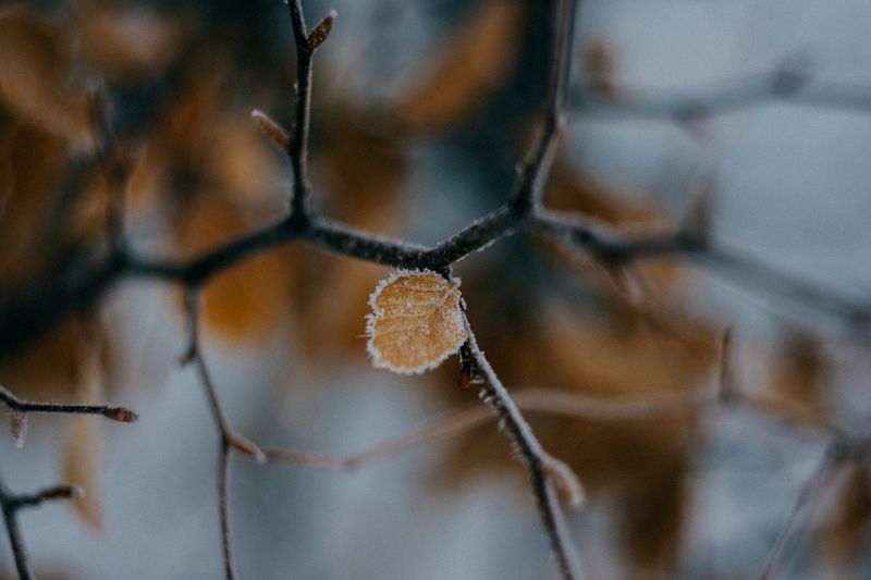 Frozen nature Cold Temperature Winter Nature Frozen Twig Day Focus On Foreground Close-up Ice Dried Plant Beauty In Nature Fragility Frost Outdoors Tree Snow
