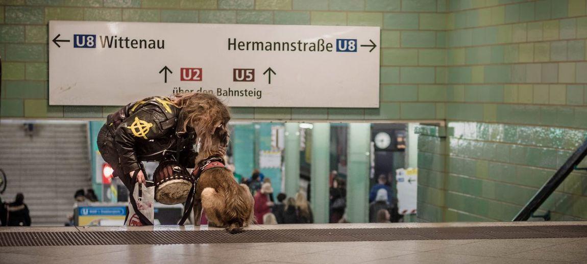 - LET'S GO - Berlin Communication Dog I Love My City Indoors  Love My Fuckin Berlin Myfuckingberlin Capture The Moment Punk Capture Berlin Discover Berlin