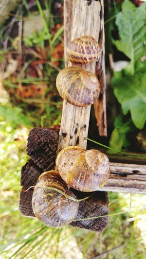 In Pairs They Came Snails Snails Having Fun Noah's Ark Snail Conference? Nature_collection Nature Photography Gossiping Snails Nature Is Art Garden Photography London Summer2016 Two Is Better Than One