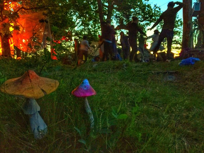 Rave party Psychedelic Shrooms Experience Shrooms Mushrooms Rave Plant Tree Growth Nature Grass Day Outdoors