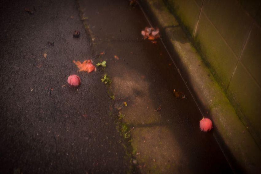 """""""真っ暗な夢のなかに浮かびあがる"""" """"They emerge from the dark of dream"""" Dreaming Japan Darkness And Light Dark Dark Photography Walk Ontheroad"""