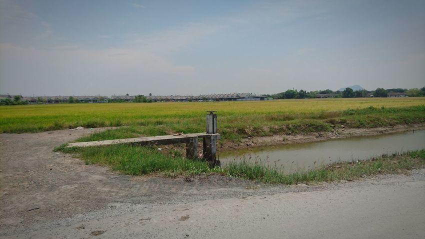 Paddy Fields Sky Sony Xperia Z5 At Alor Setar Malaysia Outdoors Rice Field