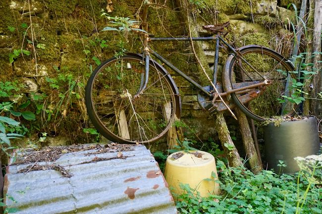 Old rusty bicycle Abandoned Bicycle Day Grass Growth Nature No People Outdoors Plant Rusty Paint The Town Yellow