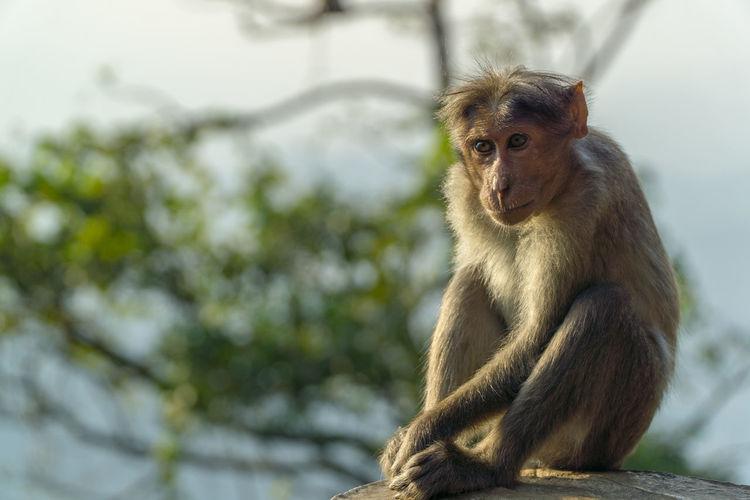 a lone monkey