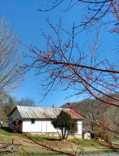 The Eve of Spring! Blue Sky Trees Hills Almost Spring Beautiful Day Beautiful Day In The Neighborhood... Smokey Mountains, NC EyeEm Nature Lover EyeEm Gallery Cell Phone Photography Cellphone Photography Tree Sky Architecture Building Exterior Built Structure Growing Residential Structure Growth Plough Stem