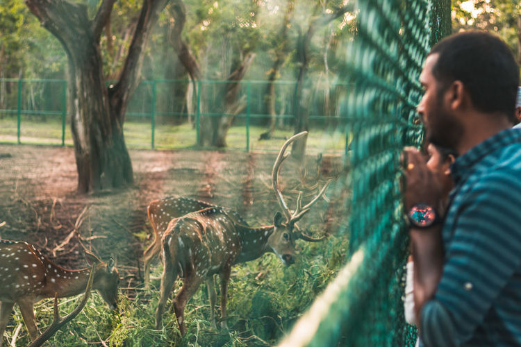 Gotta protect the animals from the animals ... Travel Green Color Sunset Humans Animal Themes Animals In The Wild Animal Wildlife Protection Fence Deer Herbivorous Cage Park Zoo Sanctuary  Coorg Karnataka Tourism Exploring Forest Photography Tree Men Rural Scene Forest Mid Adult Mid Adult Men Plant Casual Clothing Grass Countryside The Photojournalist - 2019 EyeEm Awards The Traveler - 2019 EyeEm Awards