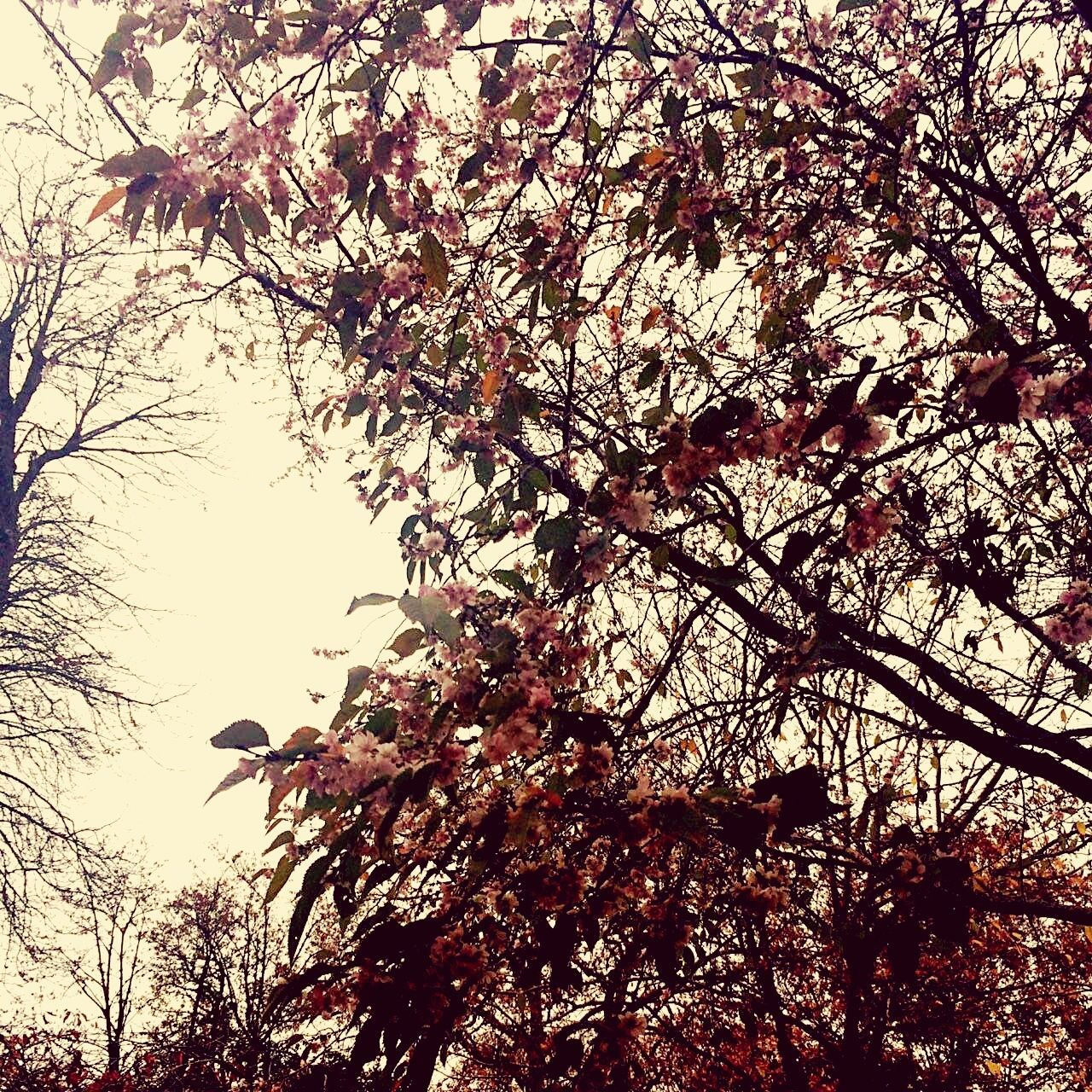 tree, branch, low angle view, nature, beauty in nature, growth, no people, blossom, day, flower, outdoors, springtime, sky, fragility, animal themes, freshness