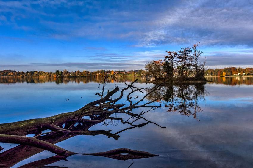 Herbst Insel Seehamer See Totholz Tree Wasser