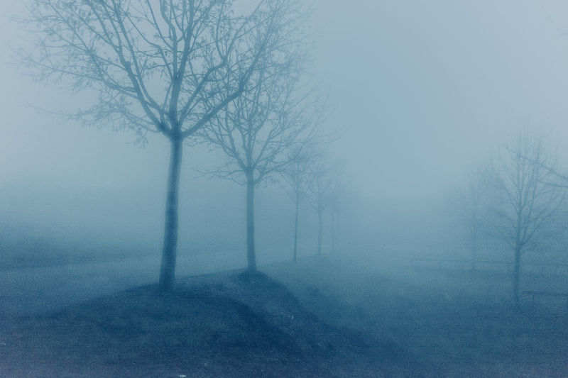 Trees Growing On Field During Foggy Weather