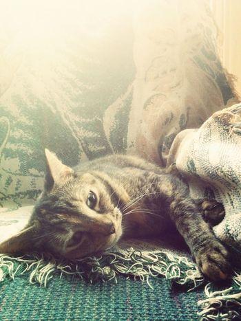 Nhia Nap Animals Cats