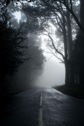 Tree Fog Road