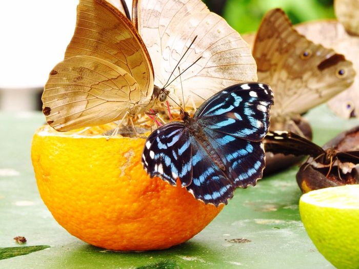 butterfly Fresh 3 London Natural History Museum Butterflies Food