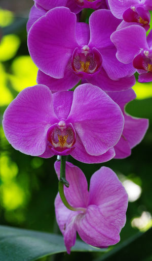 Purple orchid flower : Flower Flower Head Orchid Orchid Blossoms Purple Purple Flower Botany Growth Freshness Beauty In Nature Bunch Of Flowers Petal Plant Day Inflorescence
