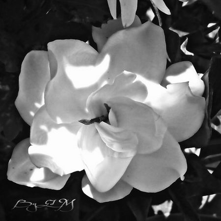 Skin Of The Night Flor Para Ti Mexico Nature Flowers Puebla To You Black And White Photography Plants