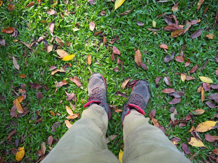 Low section of person standing on leaves on field