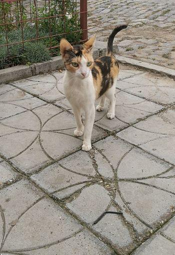 Stray cat nr. 23433