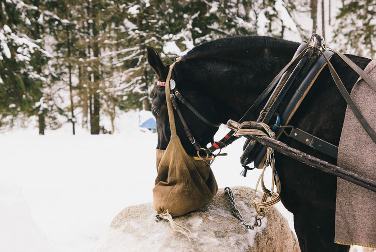 Close-Up Side View Of Horse On Snow