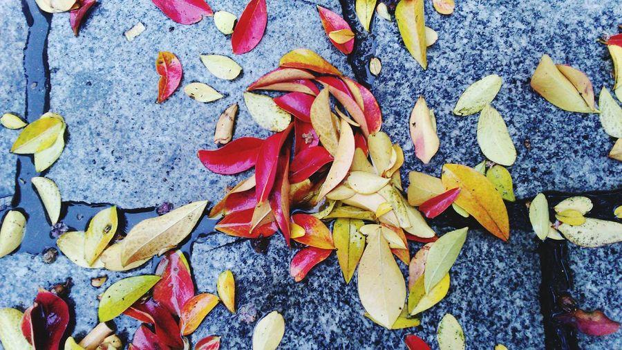 Autumn🍁🍁🍁 Multi Colored Autumn Colors Autumn Autumn Collection Autumn Leaves Autumn Colours Autumn 2016 Autumnal Autumn Is Coming Autumnal Leaves Street Life