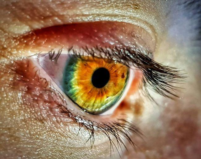 Cropped Image Of Man Eye