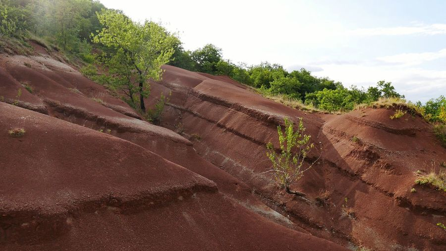 Ravin de Gratepaille - Tree Nature Landscape Geological Formation Geology Ravine Rougier Nature_collection Nature Photography Naturelovers Wild Natural Beauty Red Red Color Countryside Aveyron Beauty In Nature Nature Growth Occitanie France Plant No People Perspectives On Nature