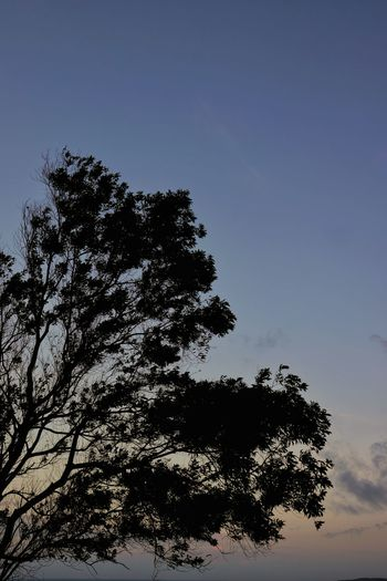 Low angle view of silhouette tree against clear sky