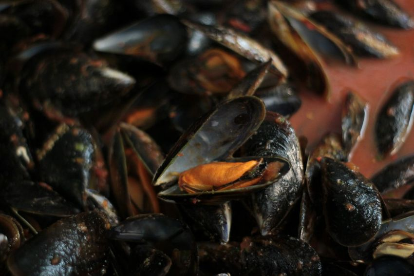 Crustacean Sea Life Seafood Low Tide Mussel Close-up Food And Drink