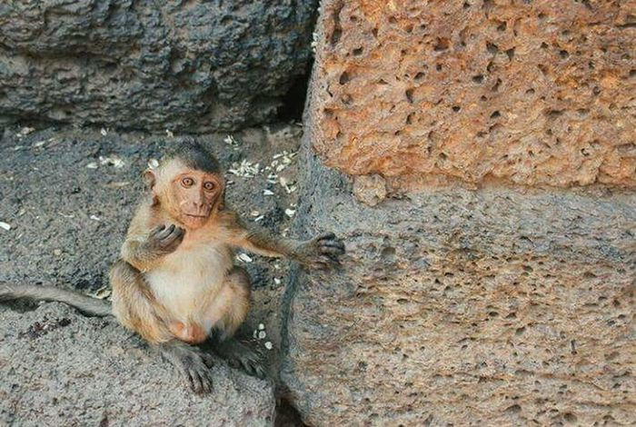 Mammal Outdoors Animal Themes Day Animals In The Wild Rock - Object Monkey No People Animal Wildlife One Animal Nature Close-up