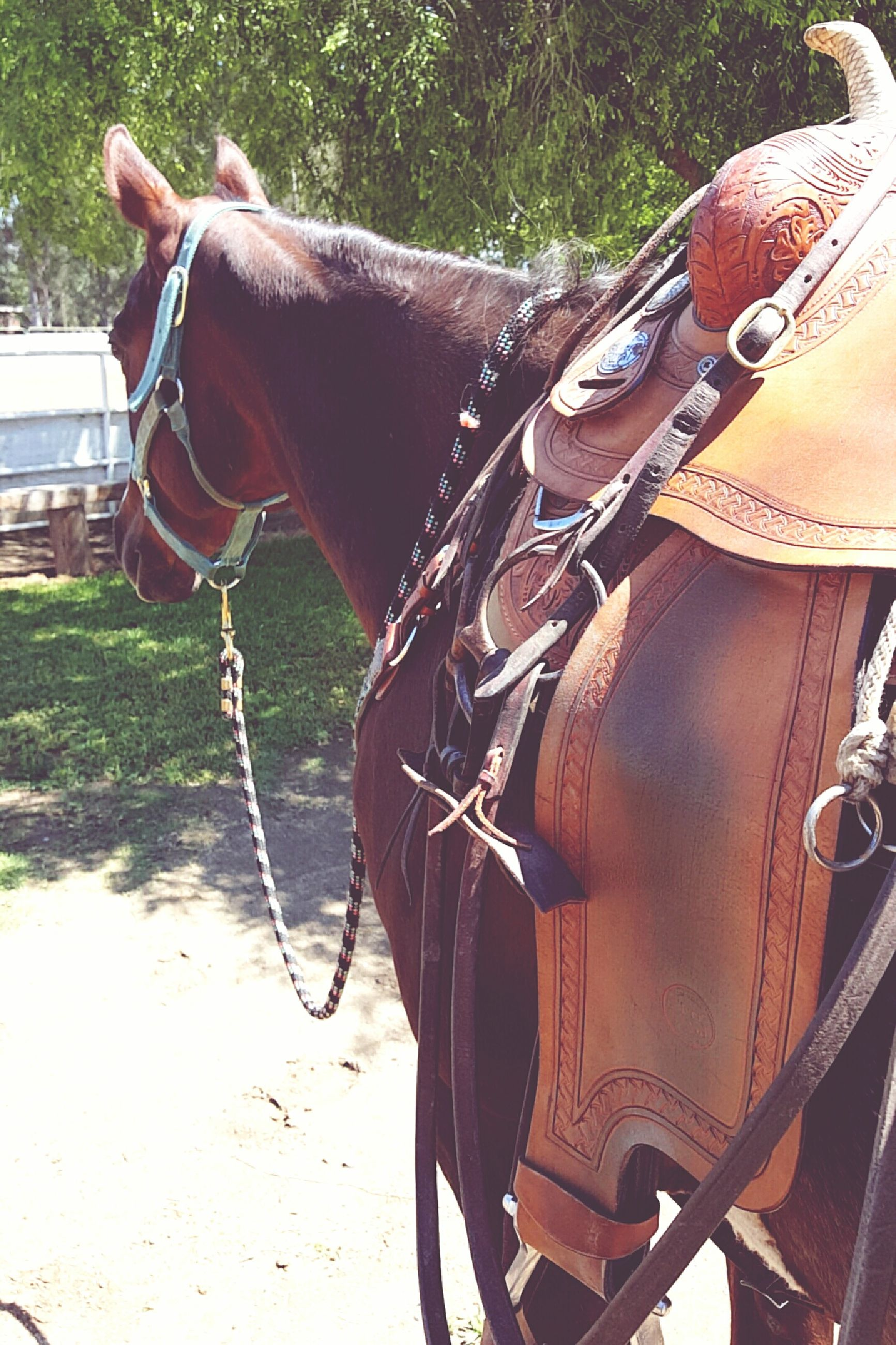horse, domestic animals, mammal, mode of transport, working animal, transportation, bridle, land vehicle, animal themes, men, low section, livestock, standing, one animal, outdoors, sunlight, day, part of