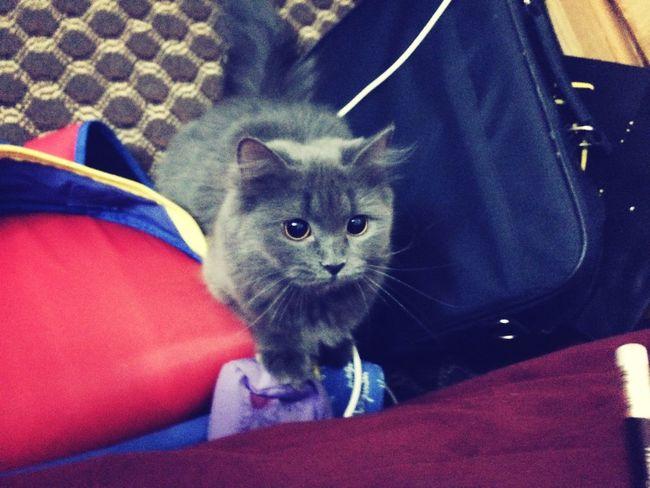 Cute Pets My Cat Aye  Wonderful