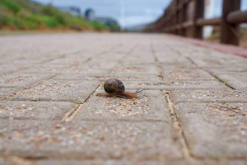 Close-up of snail on footpath