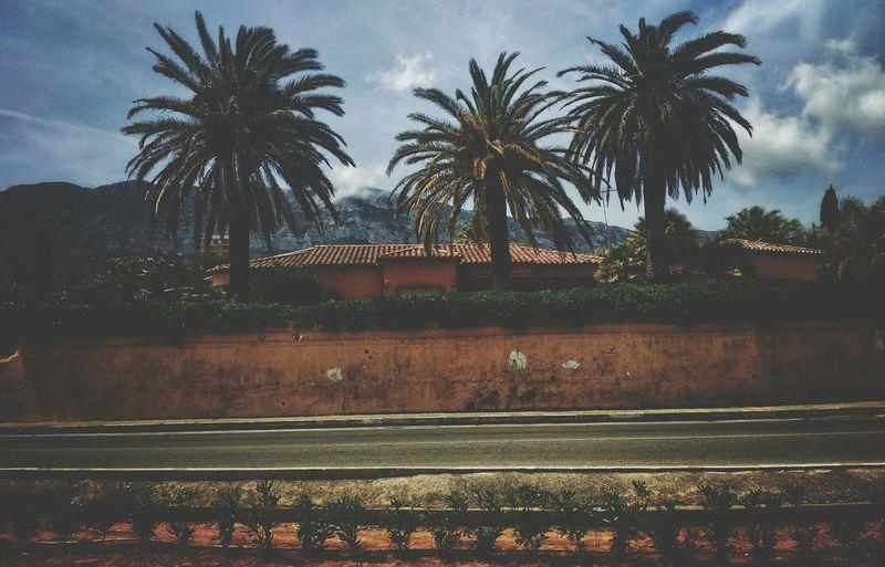 Palm life Palm Tree Tree Cloud - Sky Nature Sky Outdoors The Great Outdoors - 2017 EyeEm Awards DayTimePhotography Mountain View Colourful Dimmed SPAIN Denia Vibe E Positividade ✌ Peace