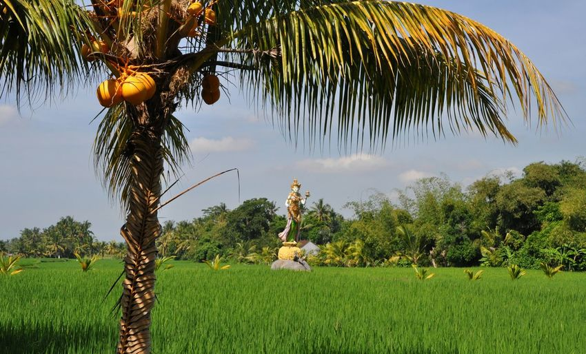 The hindu goddess of rise in a rise paddy, surrounded by palm tree in Bali, Indonesia Palm Tree Scenery Goddess Hindu Hinduism Cultural Indonesia INDONESIA Rise Rise Paddy Rise Plants Rise Plant Indonesia Traditional Indonesia Scenery Indonesia Culture Bali Bali, Indonesia No People Outdoors Day Paradise Island Paradise Paradise On Earth