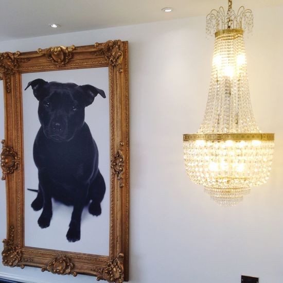 Lovely composition Contract of themes BlackDog Depression and Light at Lee Stafford Salon Taking Photos