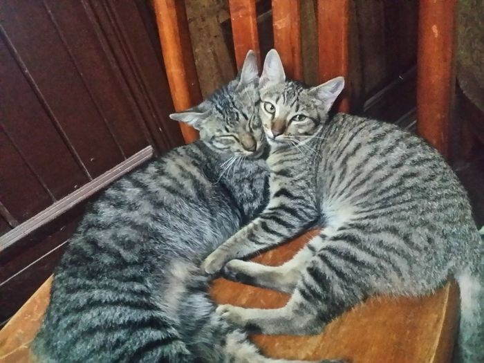 Cats also stays together with their family Blood Siblings Cats